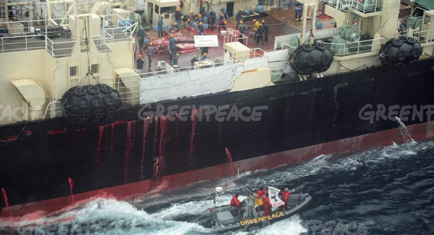 nisshin maru credit photo greenpeace